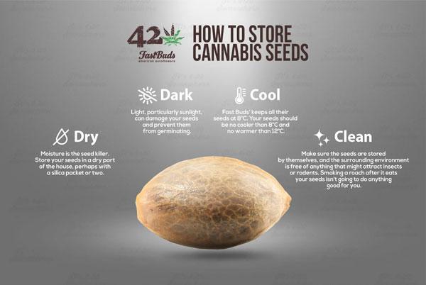 כיצד לאחסן זרעי קנאביס