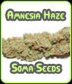 Amnesia Haze - Soma Seeds