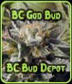 BC God Bud - BC Bud Depot