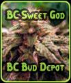 BC Sweet God - BC Bud Depot