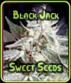 Black Jack - Sweet Seeds
