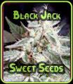 Negro Jack - Sweet Seeds