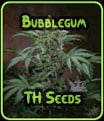 Bubblegum - TH Seeds