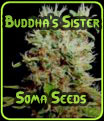 Buddha's Sister - Soma Seeds