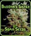 La hermana de Buda - Soma Seeds