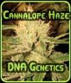 Cannalope Haze - Genética de ADN