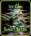 Enfriar hielo - Sweet Seeds