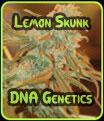 Lemon Skunk - Genética de ADN