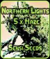Luces del Norte #5 x Haze - Sensi Seeds