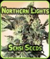 Northern Lights - Sensi Seeds