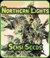 Luces del Norte - Sensi Seeds