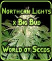 Northern Lights x Big Bud - World of Seeds - Médicos