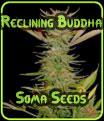Buda Reclinado - Soma Seeds