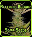 Reclining Buddha - Soma Seeds