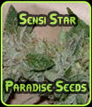 Sensi Star - Paradise Seeds