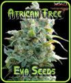African Free Eva Seeds