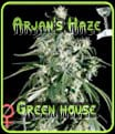 Arjans Haze Green House Seeds