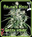 Semillas Arjans Haze de Green House