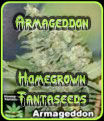 Armageddon Homegrown Fantaseeds