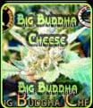 Big Cheese Gran Buda Buda