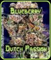 Blueberry de Dutch Passion