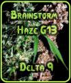 Una lluvia de ideas Haze semillas G13 Delta 9