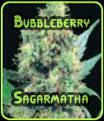 Semillas Bubbleberry Sagarmatha