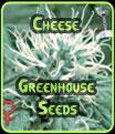 Semillas de queso de efecto invernadero