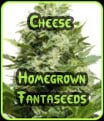 Cheese Homegrown Fantaseeds