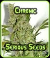 Chronic Serious Seeds