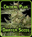 Critical Plus Dinafem Seeds