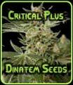 Semillas Dinafem Critical Plus