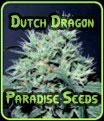 Semillas Dutch Dragon Paradise