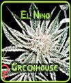 Las semillas El Niño Green House