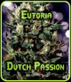 Euforia Dutch Passion