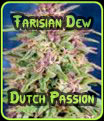 Farisian Dew Dutch Passion