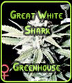 Gran tiburón blanco de efecto invernadero