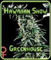 Hawaiian Snow Greenhouse