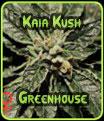 Kaia Kush Greenhouse