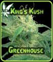 Reyes Kush Semillas de efecto invernadero