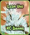 Brains Leda Uno KC