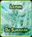 Lemon De Sjamaan