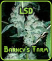 LSD Barneys Farm