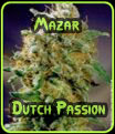 Mazar Dutch Passion Seeds