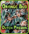 Orange Bud Dutch Passion Seeds