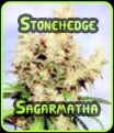 Stonehedge Sagarmatha Seeds