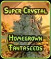 Súper Cristal de cosecha propia Fantaseeds