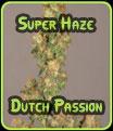 Super Haze Semillas Dutch Passion