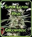 Greenhouse Seeds Super Lemon Haze
