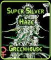 Greenhouse Seeds Super Silver Haze